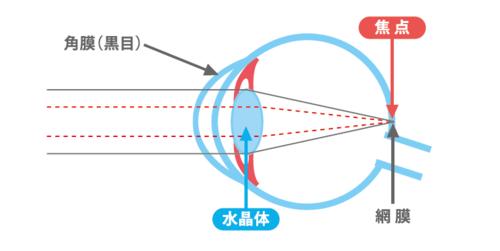 目の構造.PNG