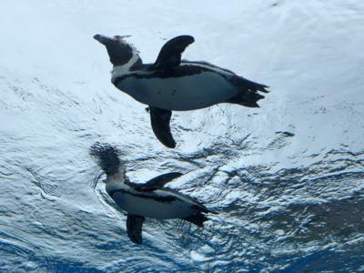 空飛ぶペンギン.png