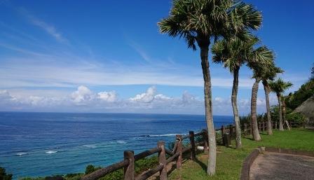 ヤシの木と海.jpg