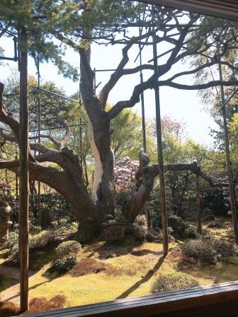 京都 樹.jpeg